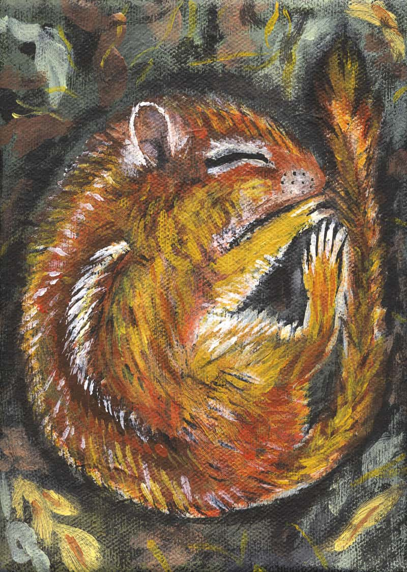 Hibernating Chipmunk by Anne Sawyer